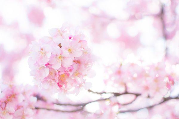 春ですね♪沢山の方とお見合いをしましょう!!